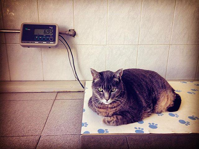 cat_vet